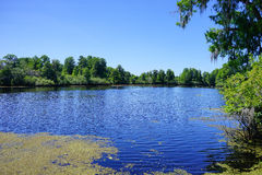 A small blue lake and tree Royalty Free Stock Images