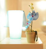Small blue orchid flower in the pot on the table, orchid near the night lamp Royalty Free Stock Photo