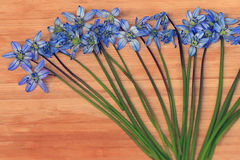 Small blue spring flowers on a wooden background Stock Photos
