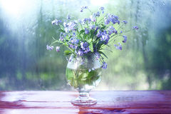 Small blue wild flowers dew Royalty Free Stock Photo