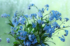 Small blue wild flowers dew Stock Images