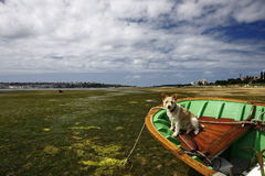 Small boat aground and dog Stock Image