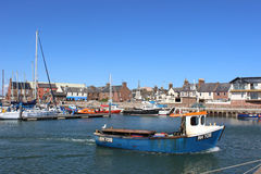 Small boat leaving Arbroath Harbour, Arbroath, Angus, Scotland with several other small boats and yachts moored in the harbour in Royalty Free Stock Image