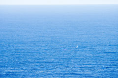 Sailing in the ocean Royalty Free Stock Image