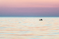 Small boat in the sea at sunrise Stock Images