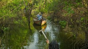 Small boats rowed by one oar beetween trees and bushes on Tonle Sap lake. Tonle Sap is the larg stock video footage