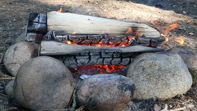 Small bonfire in forest stock video