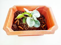 Small Bonsai in the pot stock photography