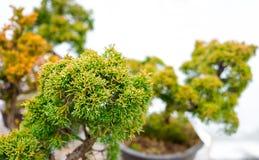 small bonsai tree stock photos bonsai tree office table