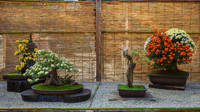 Small bonsai tree in a garden Royalty Free Stock Photos
