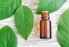 Small bottle of essential oil and fresh leaves over wooden background. Top view, copy space. Aromatherapy and spa concept. Stock Image