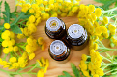 Small bottles of essential tansy oil (herbal extract, tincture). Close up, top view, copy space. Royalty Free Stock Photography