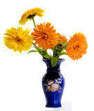 Small bouquet. Small yellow bouquet of a calendula in a dark blue vase stock images