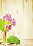 Small bouquet of Bergenia flowers on wooden background Stock Photography