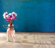 A small bouquet of flowers of cyclamen in a glass bottle on a wooden table. on a blue background. With space for text Stock Photos
