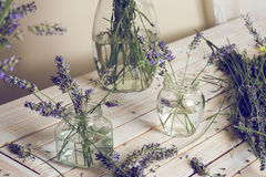 Small bouquet of fresh lavender in jars with water Stock Image