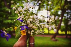 Small bouquet of freshly cut wildflowers stock image