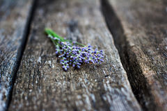 Small bouquet of lavender Royalty Free Stock Image