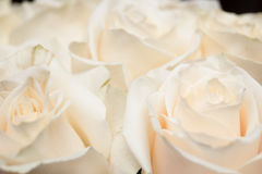 A small bouquet of light pink roses Royalty Free Stock Image