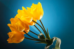 Small bouquet made of beautiful yellow tulips Royalty Free Stock Photo