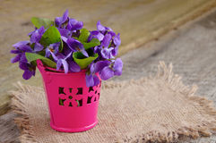 Small bouquet with meadow violets in a bucket. Stock Photography