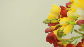 Small bouquet of multicolored freesias in vase stock video