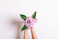 Small bouquet of pink carnations in female hands on a white back stock image