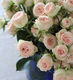 Small bouquet of roses Royalty Free Stock Image