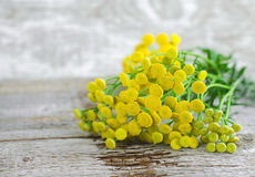 Small bouquet of tansy flowers, close up, wooden background. Small bouquet of tansy flowers stock photo