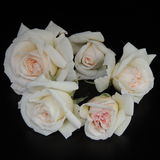 Small bouquet of white roses on a black background Royalty Free Stock Images