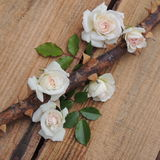 Small bouquet of white roses on thorny branches on a wooden  background Stock Photography