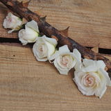 Small bouquet of white roses on thorny branches on a wooden  background Royalty Free Stock Image