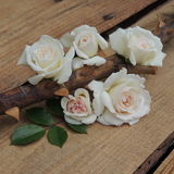 Small bouquet of white roses on thorny branches on a wooden  background Stock Image