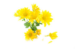 Small bouquet of yellow flowers Royalty Free Stock Images