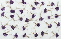 Small bouquets of fragrant forest flowers violets white background Stock Photo