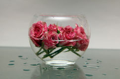 A small bowl of roses Royalty Free Stock Photography