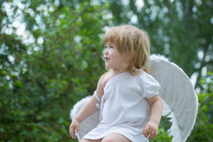 Small boy in angel wings Stock Image