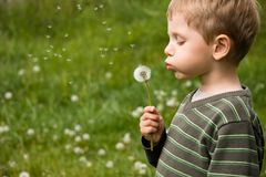 Small boy blowing dandelion. 4 years old boy blowing dandelion in summer day Royalty Free Stock Images