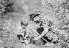Small boy child help father in farming. Eco farm. father and son in cowboy hat on ranch. hoe, pot and shovel. Garden royalty free stock photography