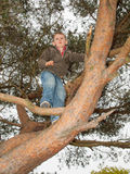 Small boy climbing high in a tree Royalty Free Stock Images