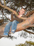Small boy climbing high in a tree Stock Photos
