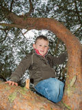 Small boy climbing high in a tree Stock Images