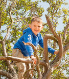 Small boy climbing in a tree Royalty Free Stock Image