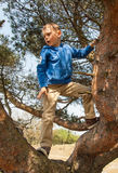 Small boy climbing in a tree Stock Photo