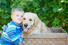 Small boy and cute dog in basket stock images