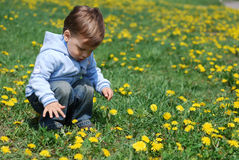 Small boy in dandelions Royalty Free Stock Photo