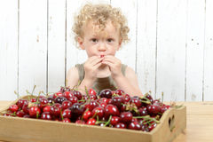 A small boy eating cherries Stock Image