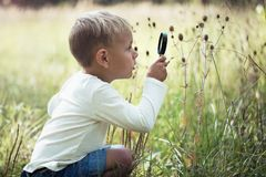 A small boy explores with a magnifying glass plants and insects royalty free stock photography