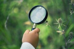 A small boy explores with a magnifying glass plants and insects royalty free stock images