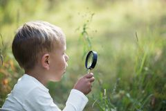A small boy explores with a magnifying glass plants and insects stock photos